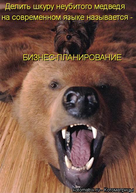 Котоматрица: Делить шкуру неубитого медведя на современном языке называется - БИЗНЕС-ПЛАНИРОВАНИЕ