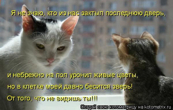 Котоматрица: Я не знаю, кто из нас зактыл последнюю дверь, и небрежно на пол уронил живые цветы, но в клетке моей давно бесится зверь! От того, что не видиш
