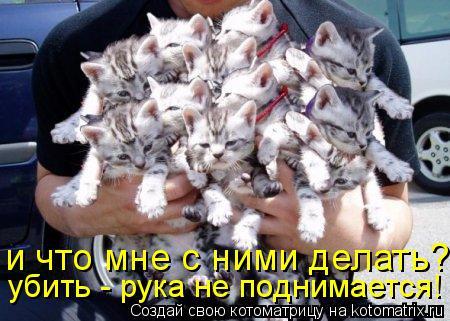 Котоматрица: и что мне с ними делать? убить - рука не поднимается!