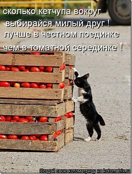 Котоматрица: сколько кетчупа вокруг выбирайся милый друг ! лучше в честном поединке чем в томатной серединке !
