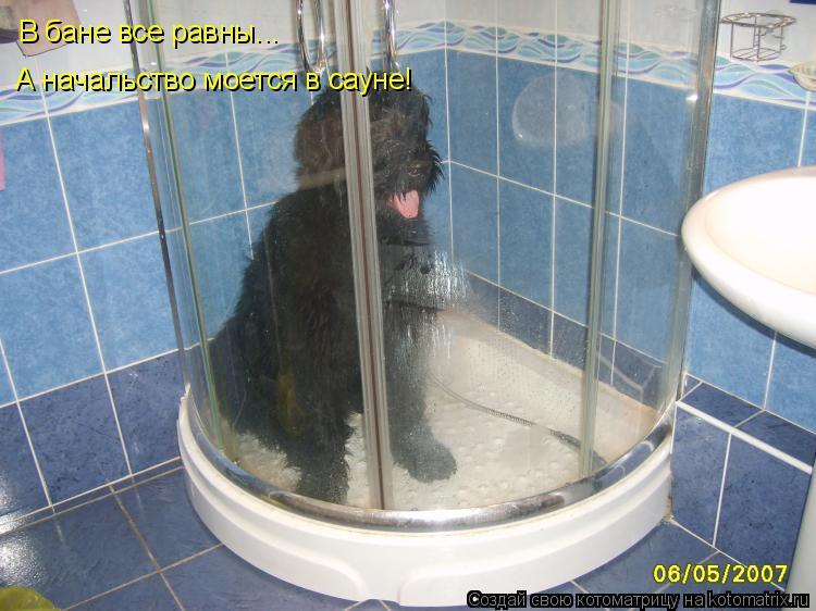 Котоматрица: В бане все равны... А начальство моется в сауне!