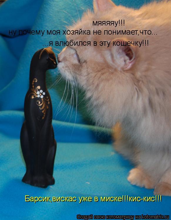 Котоматрица: мяяяяу!!! Барсик,вискас уже в миске!!!кис-кис!!! ну почему моя хозяйка не понимает,что... ...я влюбился в эту кошечку!!!