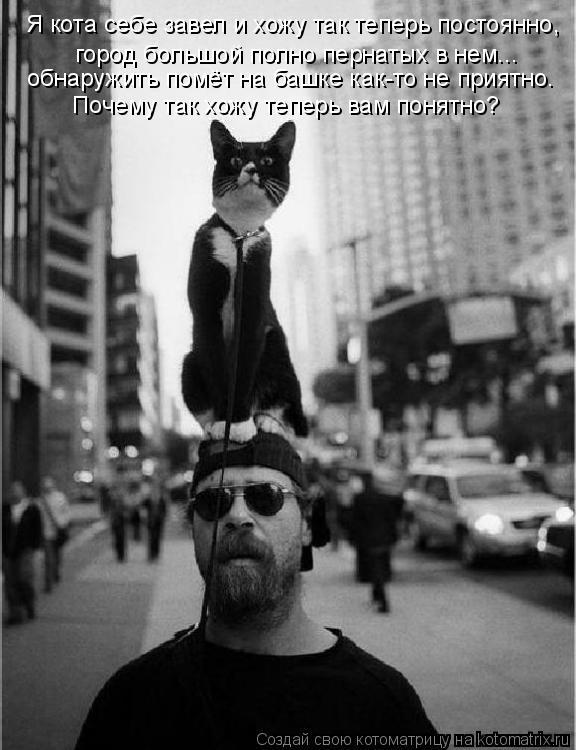 Котоматрица: Я кота себе завел и хожу так теперь постоянно, город большой полно пернатых в нем... обнаружить помёт на башке как-то не приятно. Почему так х