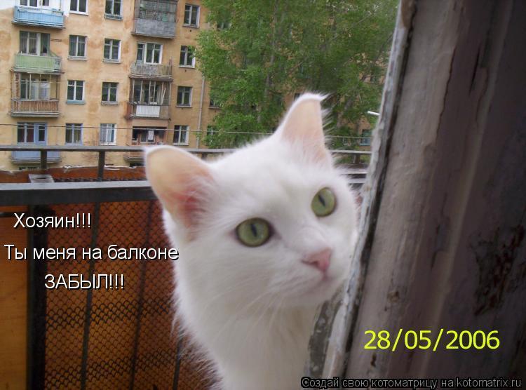 Котоматрица: Хозяин!!! Ты меня на балконе ЗАБЫЛ!!!