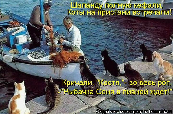 """Котоматрица: Шаланду полную кефали, Коты на пристани встречали! Кричали: """"Костя,""""- во весь рот. -""""Рыбачка Соня в пивной ждет!"""""""
