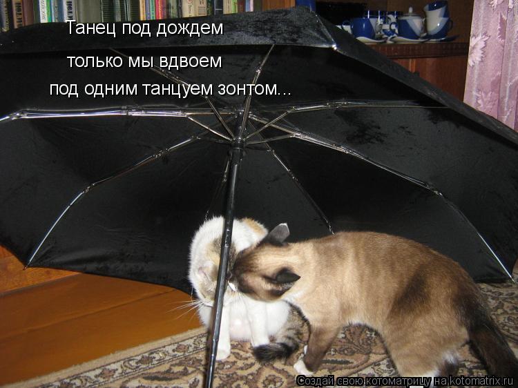 Котоматрица: Танец под дождем только мы вдвоем под одним танцуем зонтом...