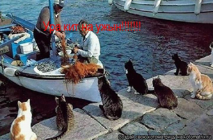 Котоматрица: Ура кит на ужын!!!!!!!
