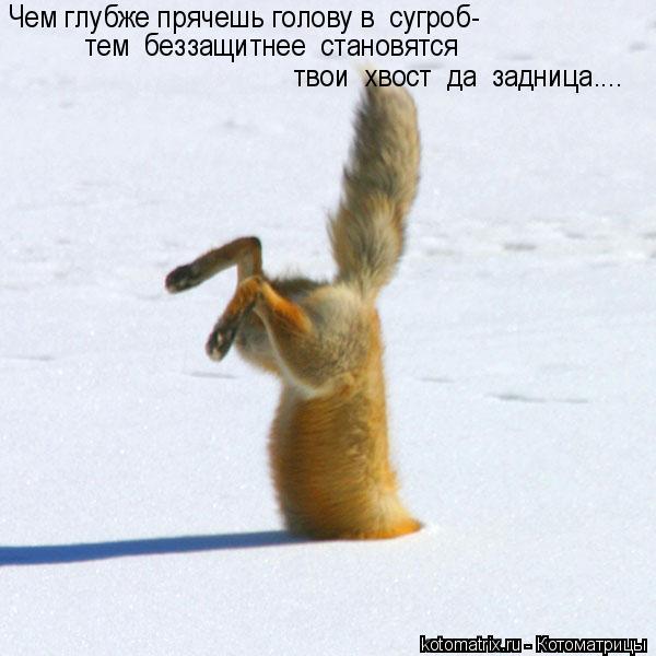 Котоматрица: Чем глубже прячешь голову в  сугроб- тем  беззащитнее  становятся   твои  хвост  да  задница....