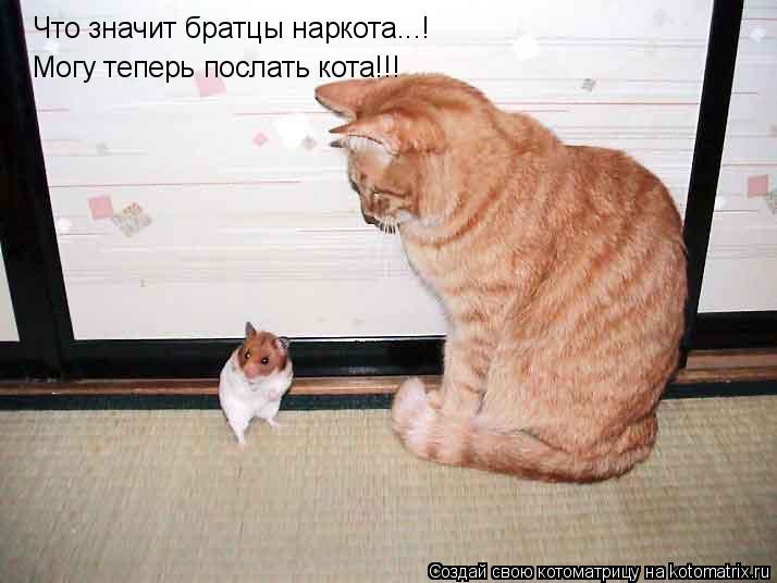 Котоматрица: Что значит братцы наркота...! Могу теперь послать кота!!!