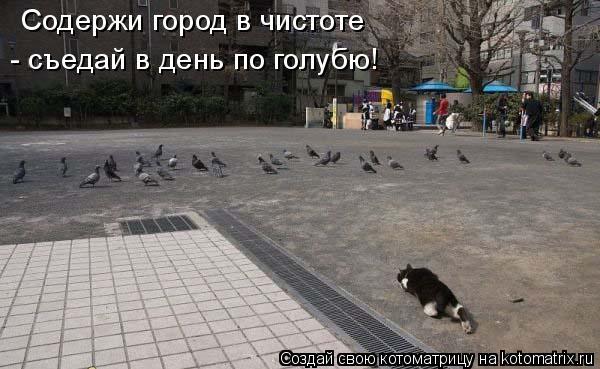 Котоматрица: Содержи город в чистоте  - съедай в день по голубю!