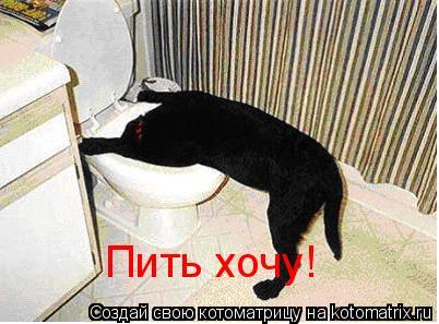 Котоматрица: Пить хочу!