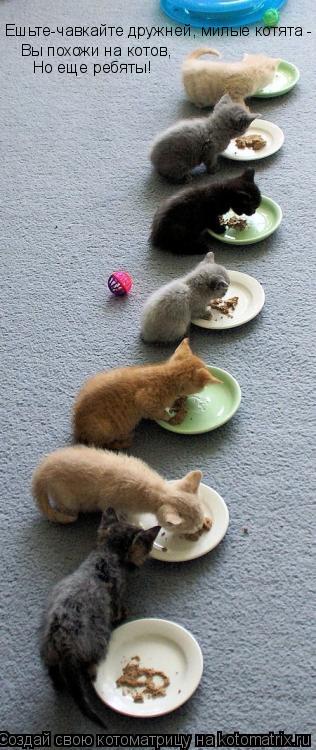Котоматрица: Ешьте-чавкайте дружней, милые котята -  Вы похожи на котов, Но еще ребяты!