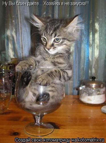 Котоматрица: Ну Вы блин даёте....Хозяйка я не закуска!!!