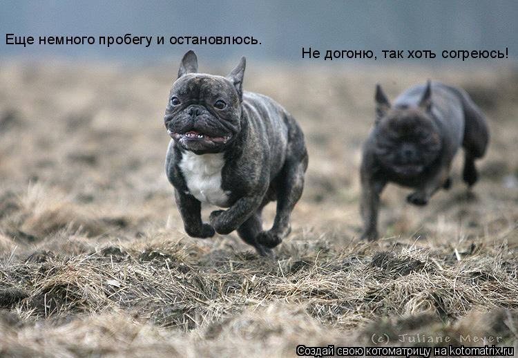 Котоматрица: Еще немного пробегу и остановлюсь.  Не догоню, так хоть согреюсь!