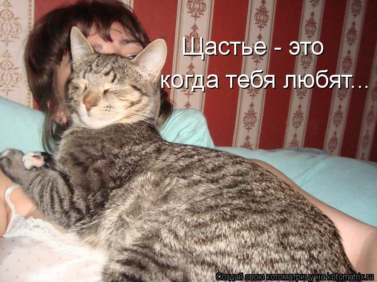 Котоматрица: когда тебя любят... Щастье - это
