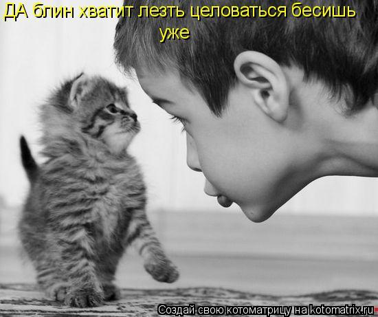 Котоматрица: ДА блин хватит лезть целоваться бесишь  уже