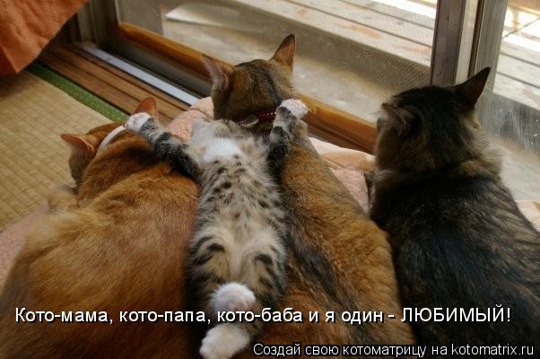 Котоматрица: Кото-мама, кото-папа, кото-баба и я один - ЛЮБИМЫЙ!