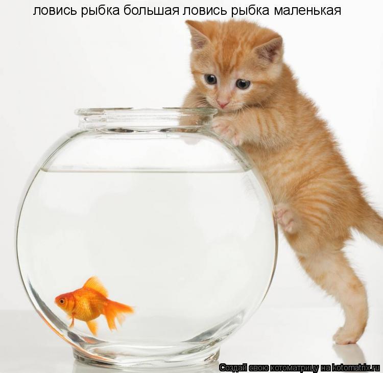 Котоматрица: ловись рыбка большая ловись рыбка маленькая