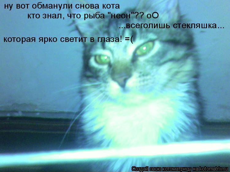 """Котоматрица: ну вот обманули снова кота кто знал, что рыба """"неон""""?? оО ...всеголишь стекляшка... которая ярко светит в глаза! =("""