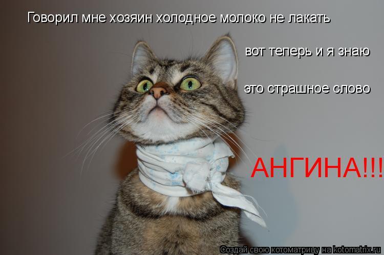 Котоматрица: Говорил мне хозяин холодное молоко не лакать вот теперь и я знаю это страшное слово АНГИНА!!!!