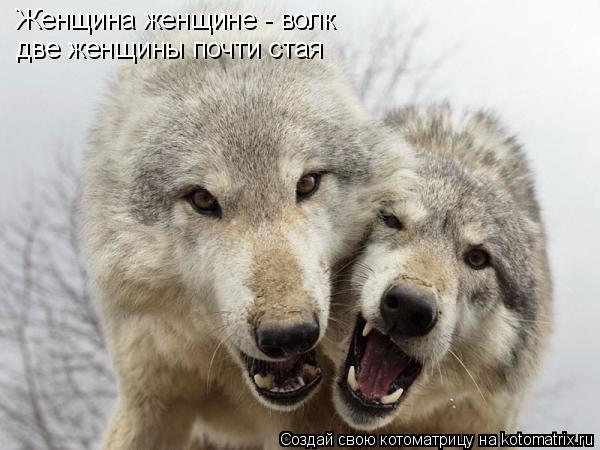 Котоматрица: Женщина женщине - волк две женщины почти стая