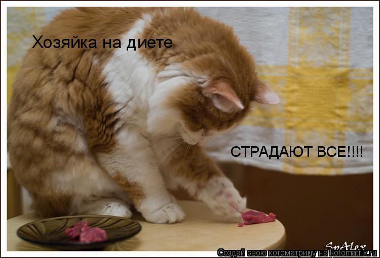 Котоматрица: Хозяйка на диете СТРАДАЮТ ВСЕ!!!!
