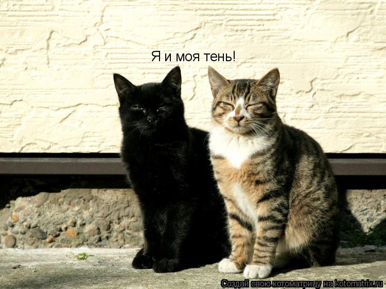 Котоматрица: Я и моя тень!