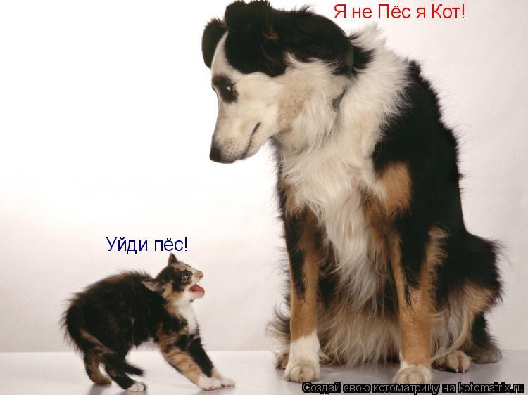 Котоматрица: Уйди пёс! Я не Пёс я Кот!