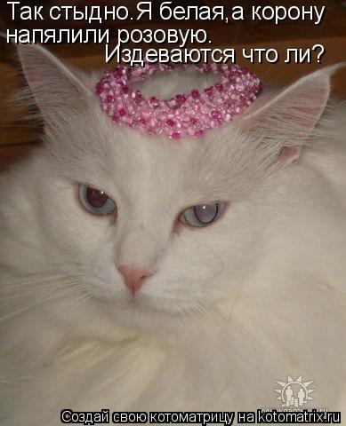 Котоматрица: Так стыдно.Я белая,а корону  напялили розовую. Издеваются что ли?