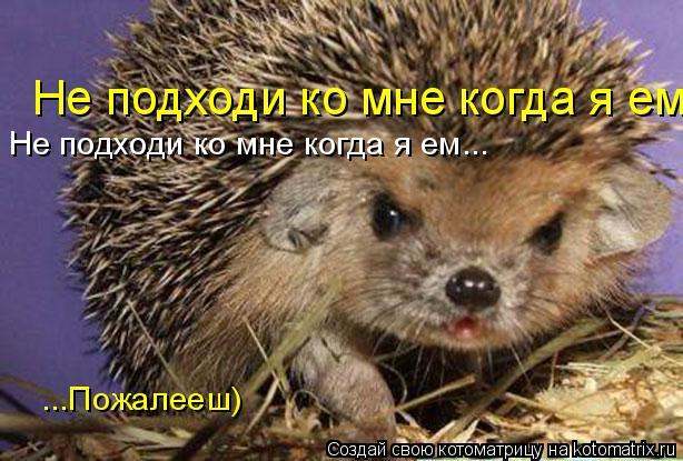 Котоматрица: Не подходи ко мне когда я ем... Не подходи ко мне когда я ем... ...Пожалееш)