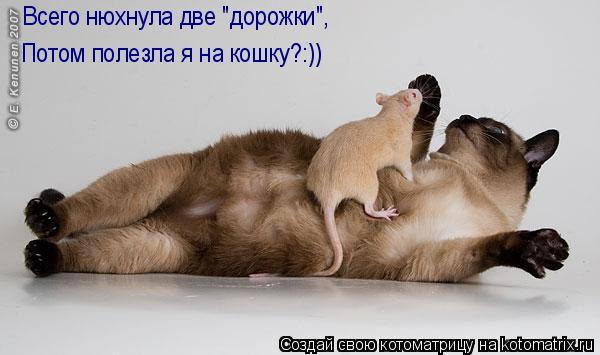 """Котоматрица: Всего нюхнула две """"дорожки"""", Потом полезла я на кошку?:))"""