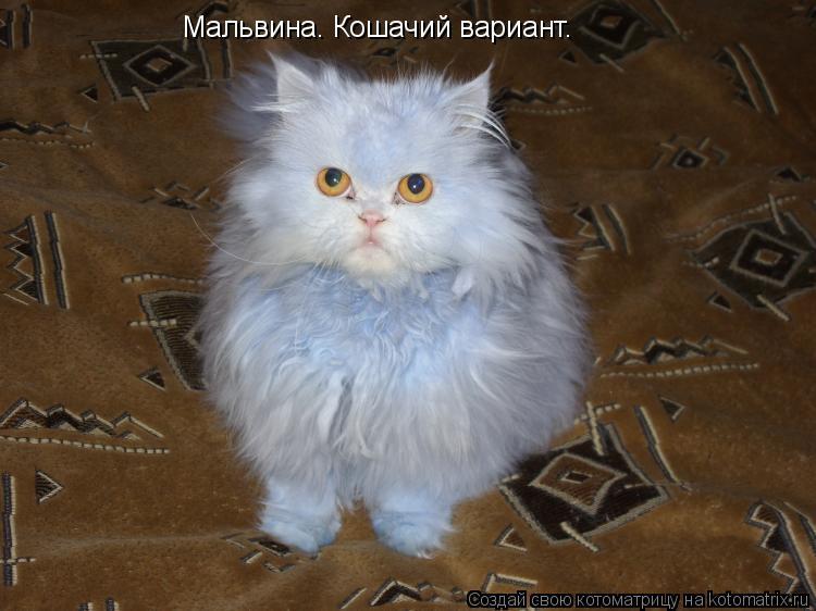 Котоматрица: Мальвина. Кошачий вариант.