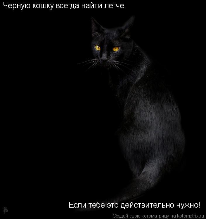 Котоматрица: Черную кошку всегда найти легче, Если тебе это действительно нужно!