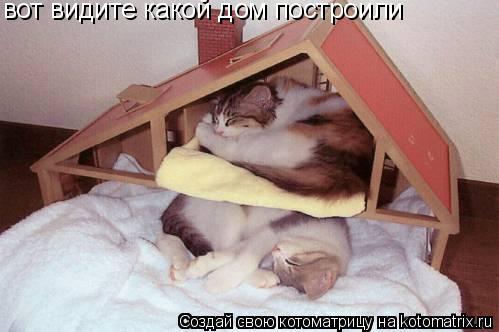 Котоматрица: вот видите какой дом построили