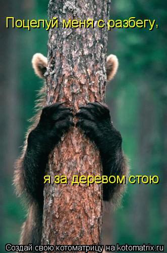 Котоматрица: Поцелуй меня с разбегу я за деревом стою  ,