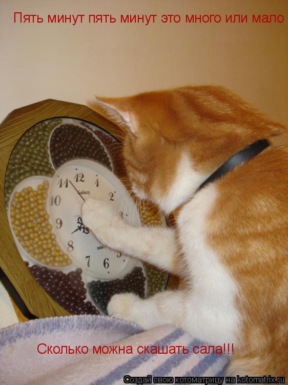 Котоматрица: Пять минут пять минут это много или мало Сколько можна скашать сала!!!