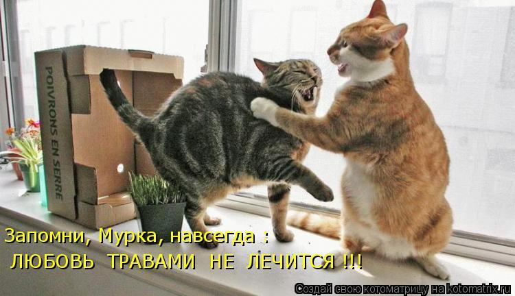 Котоматрица: Запомни, Мурка, навсегда :  ЛЮБОВЬ  ТРАВАМИ  НЕ  ЛЕЧИТСЯ !!!