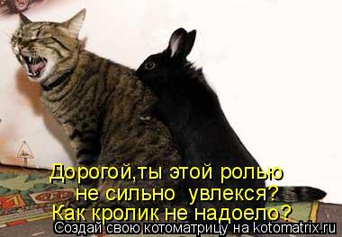 Котоматрица: Дорогой,ты этой ролью  не сильно  увлекся? Как кролик не надоело?