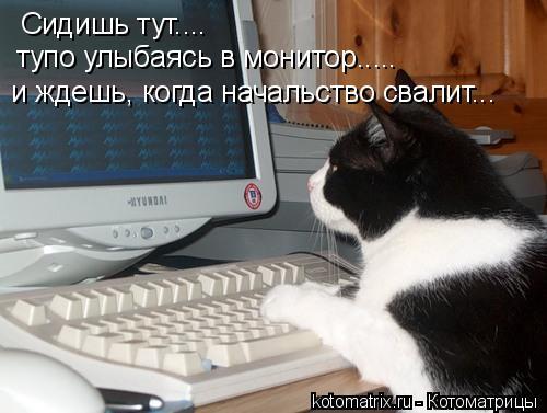 Котоматрица: Сидишь тут.... тупо улыбаясь в монитор..... и ждешь, когда начальство свалит...
