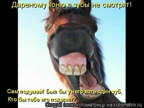 Котоматрица: Дареному коню в зубы не смотрят! Сам подумай! Был бы у него хоть один зуб, Кто бы тебе его подарил?..
