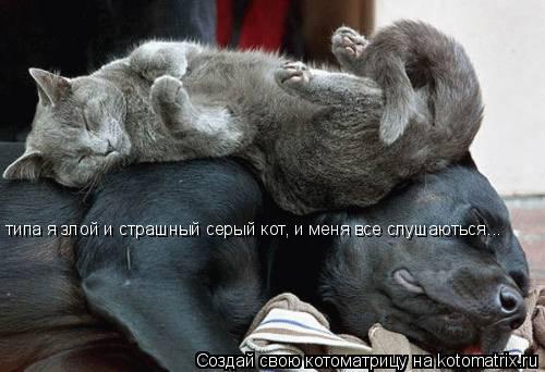 Котоматрица: типа я злой и страшный серый кот, и меня все слушаються... типа я злой и страшный серый кот, и меня все слушаються...