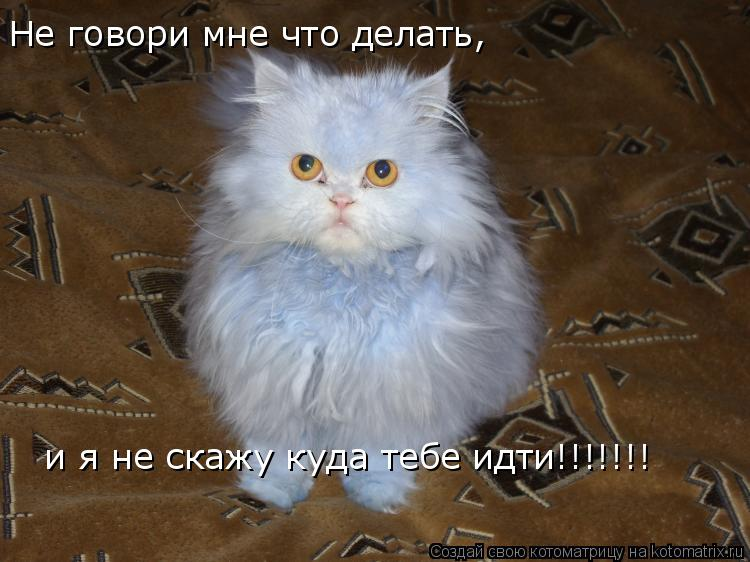 Котоматрица: Не говори мне что делать, и я не скажу куда тебе идти!!!!!!!