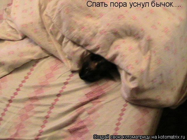 Котоматрица: Спать пора уснул бычок....