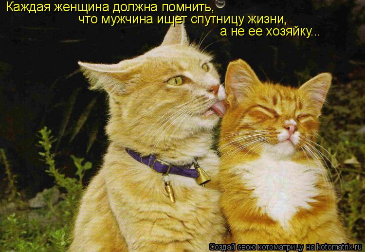 Котоматрица: Каждая женщина должна помнить, что мужчина ищет спутницу жизни, а не ее хозяйку...