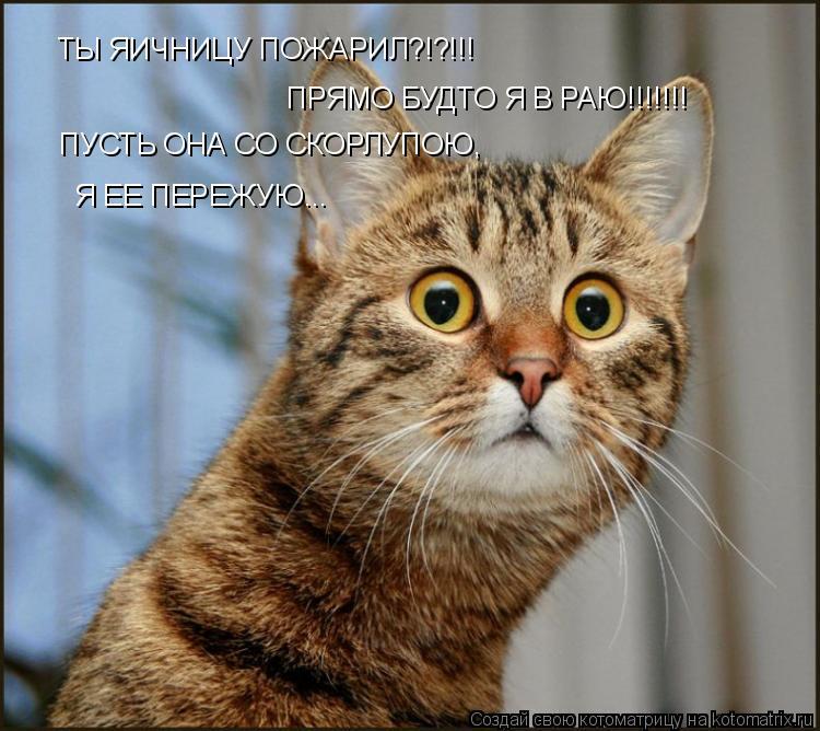 Котоматрица: ТЫ ЯИЧНИЦУ ПОЖАРИЛ?!?!!! ПРЯМО БУДТО Я В РАЮ!!!!!!! ПУСТЬ ОНА СО СКОРЛУПОЮ, Я ЕЕ ПЕРЕЖУЮ...