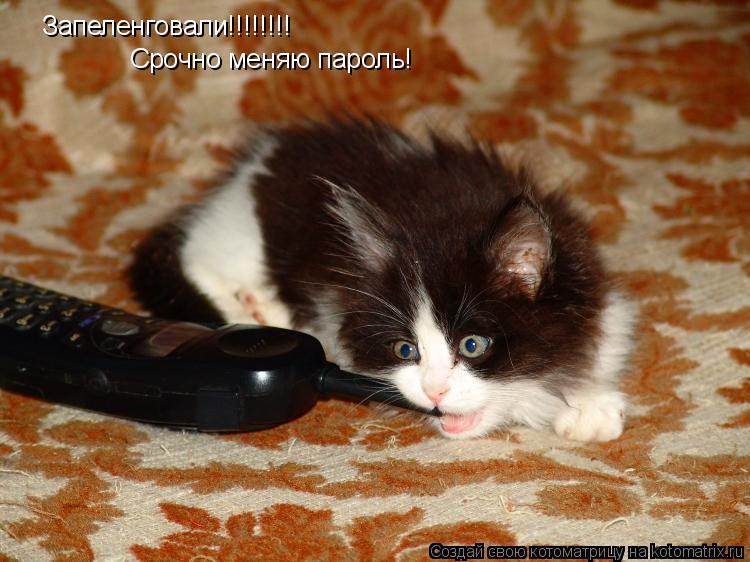 Котоматрица: Запеленговали!!!!!!!! Срочно меняю пароль!