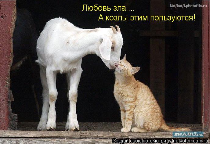 Котоматрица: Любовь зла.... А козлы этим пользуются!