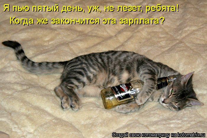 Котоматрица: Я пью пятый день, уж, не лезет, ребята! Когда же закончится эта зарплата?