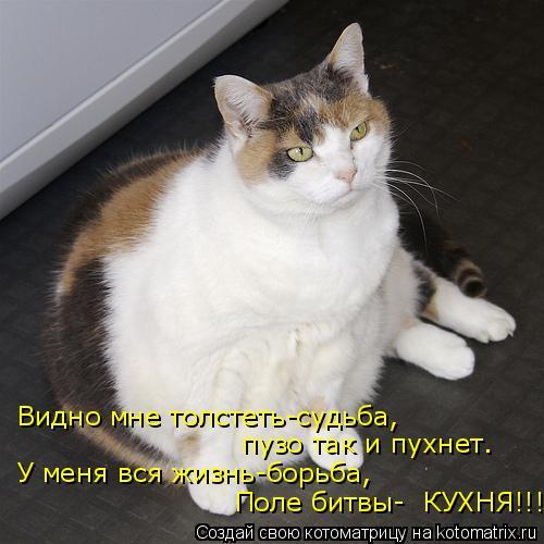 Котоматрица: Видно мне толстеть-судьба, пузо так и пухнет. У меня вся жизнь-борьба, Поле битвы-  КУХНЯ!!!!