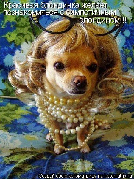 Котоматрица: Красивая блондинка желает познакомиться с симпотичным  блондином!!!